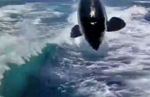 whale video