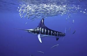 photo underwater