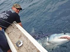 shark fishing
