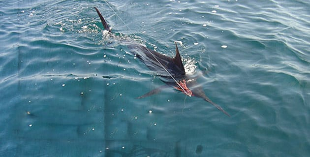 Top Marlin Lures