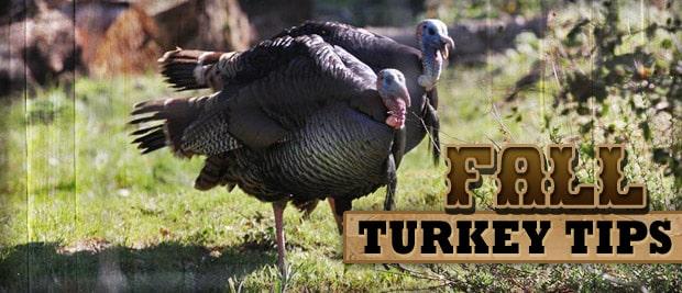 ca turkey