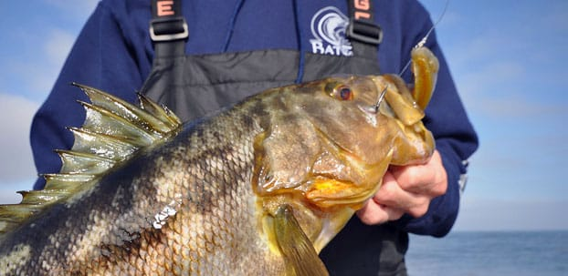 Calico bass fishing tips to catch more for Calico bass fishing