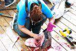 tuna cleaning