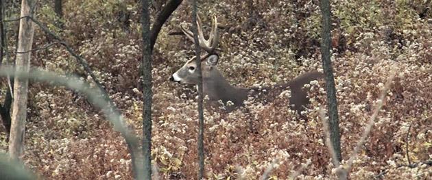 Cansas Whitetail hunting