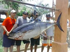 tuna report