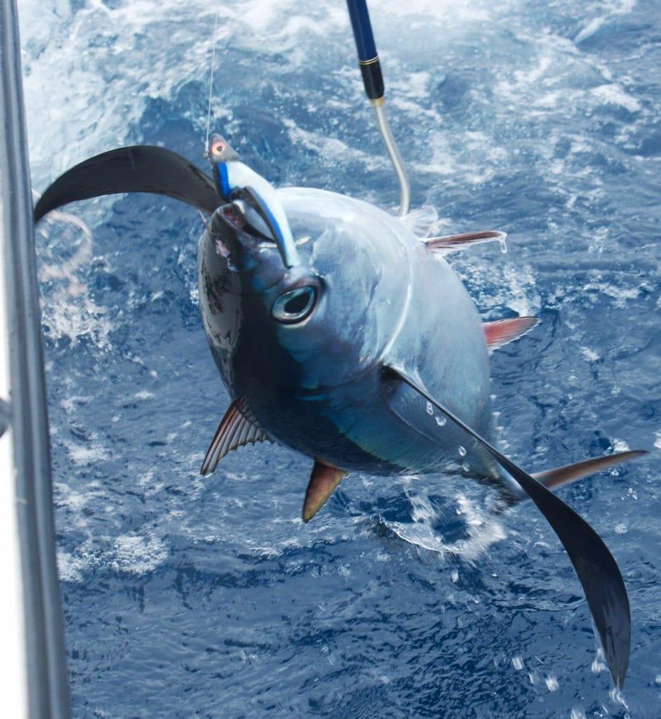 tuna classic