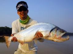 Amazon Fishing and Vampire Fish