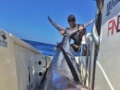 socal marlin