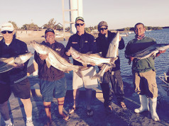 snook report