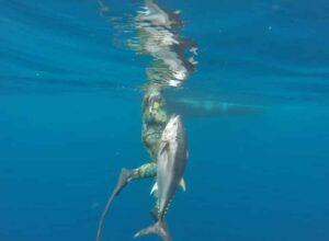 march bluefin