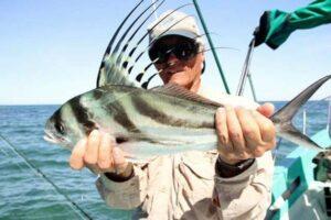 roosterfish baja