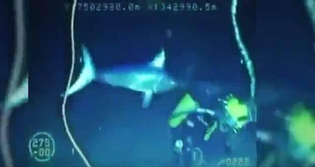 swordfish - Swordfish Skewers Driver