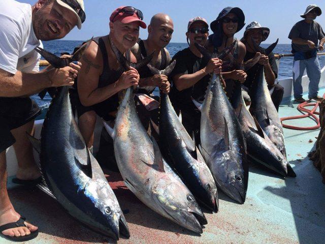 tuna bite - ban pacific bluefin