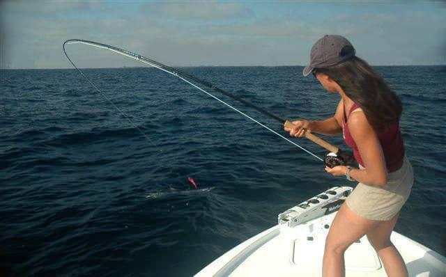 Michelle Bowman mako sharks