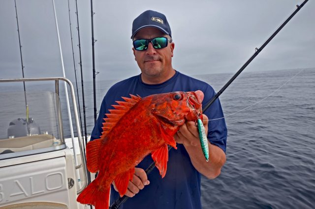 rockfish at the edge of the bottom - Rockfish Trip