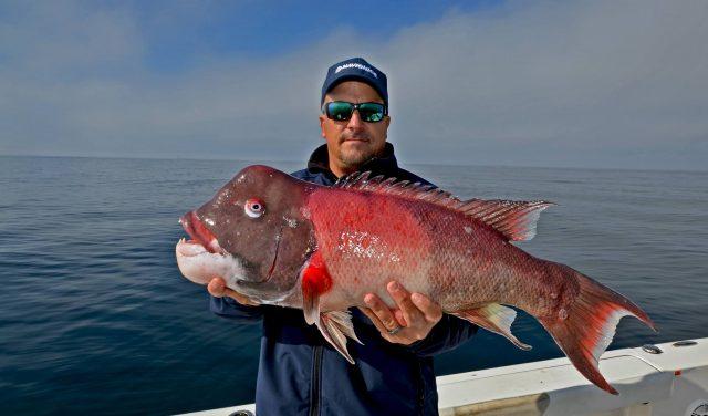 Maximize Rockfish Results - Rockfish Trip