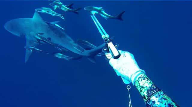 spearfishing video - H2o Hunters