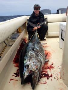 tuna reports