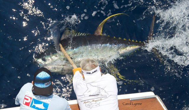 Carol Lynne yellowfin tuna