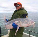 sturgeon fishing California Anglers