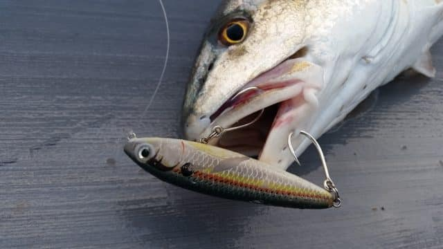 mustad hook catch