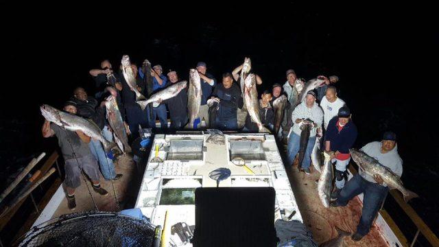 White Seabass caught at night