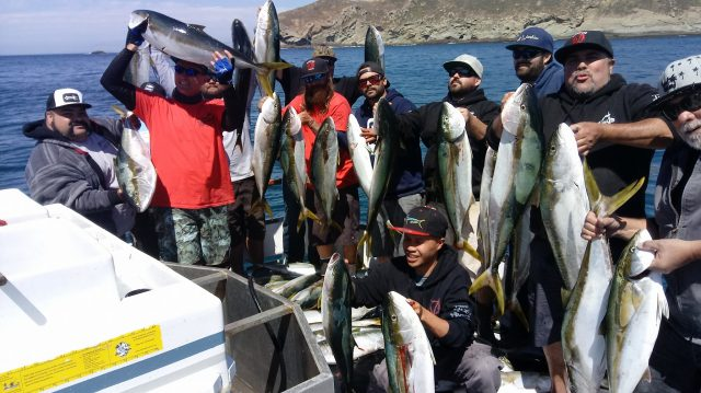 catches lots of yellowtail