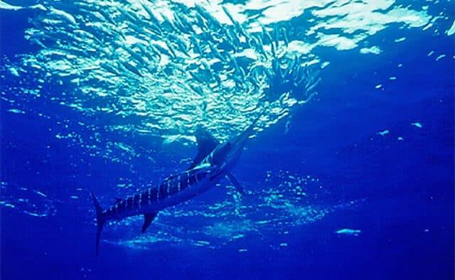 nautical sportfishing Mexico fishing