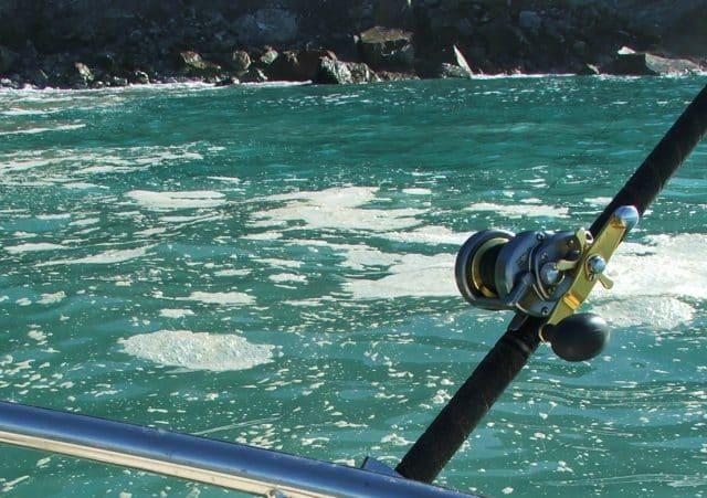 seabass foam water fishing