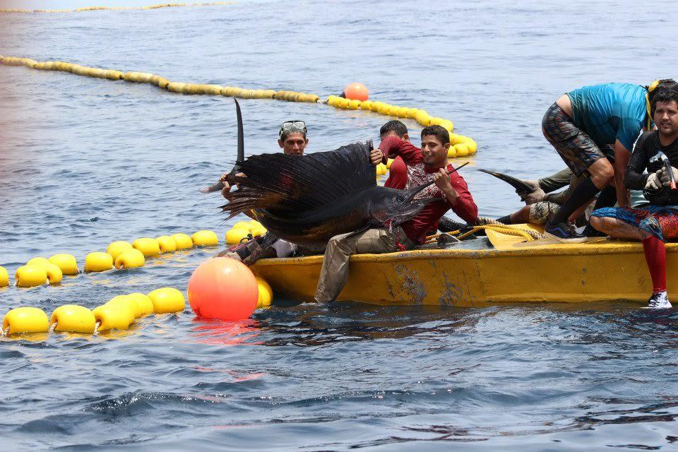 billfish by catch fishing costa netting fish