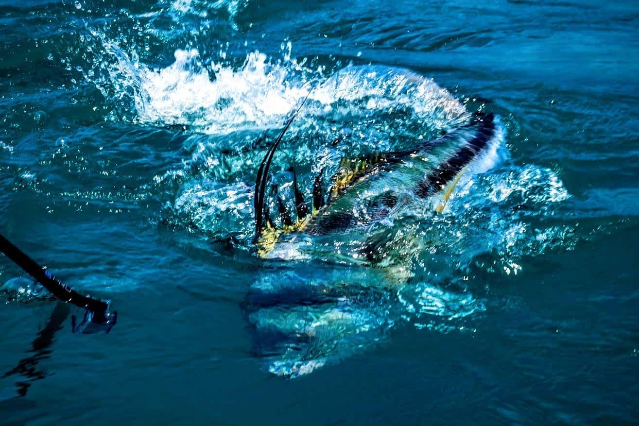 roosterfish fishing