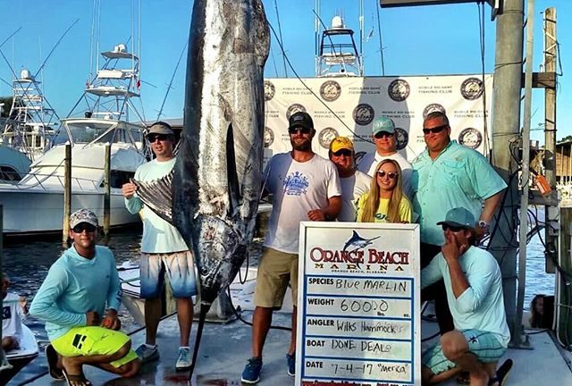 winning marlin