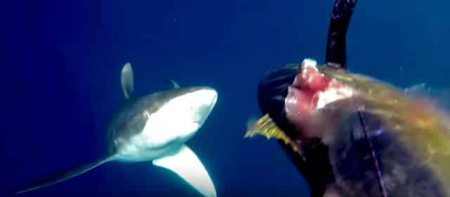 Adventure Club-shark vs Spearfisherman - Shark Spearfisherman