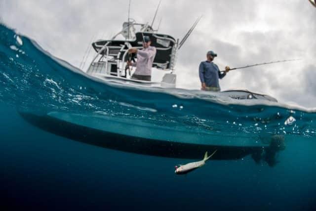 mustad hooks-yellowtail snapper fishing