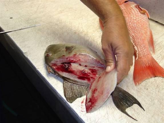 clean a trigger fish