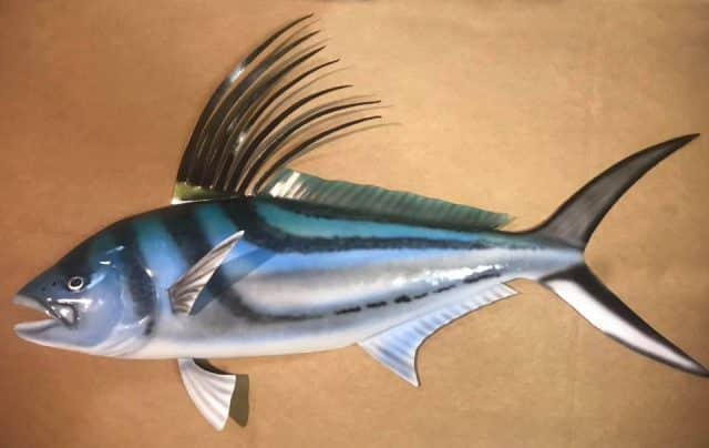 roosterfish art