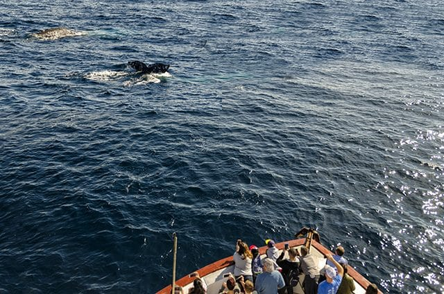 Whale watching on the Legend