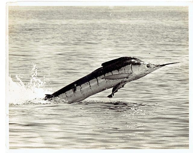 East Cape Sportsfishing