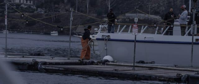 sport boats load up with bait at the Everingham Bros bait barge