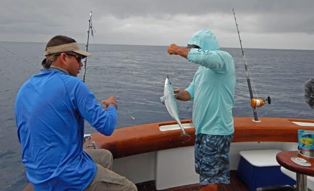 live bait for marlin