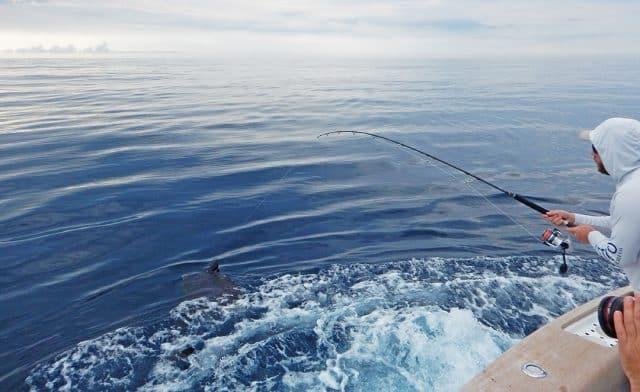 catching sailfish on okuma spinning reel