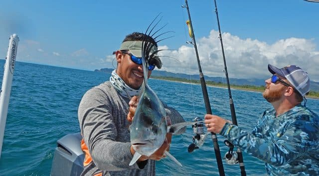 costa rican roosterfish