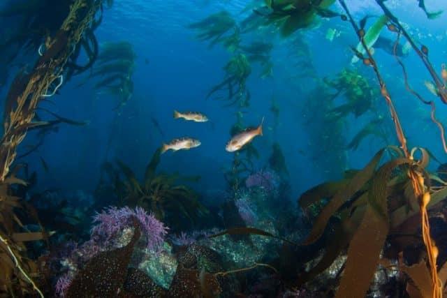 West Coast groundfish
