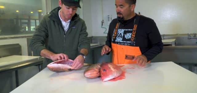 fresh fish tips