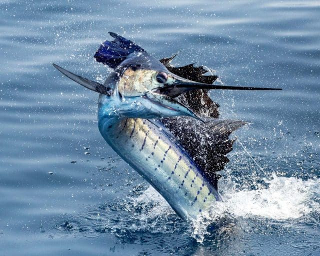 Casa Vieja Fishes