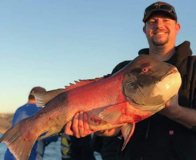 socal rockfish