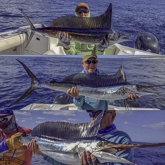 Monster Yellowfin Tuna