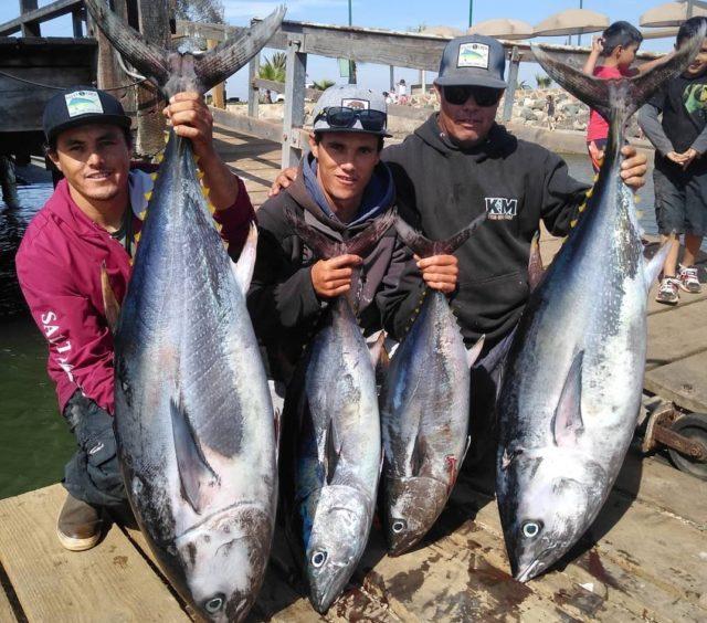 Big bluefin