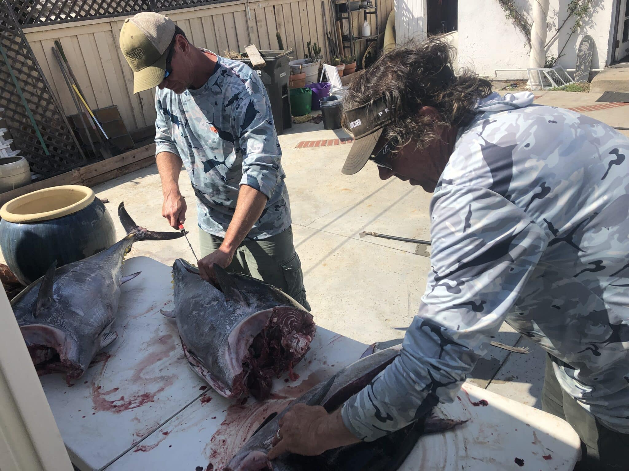 Bluefin cleaning