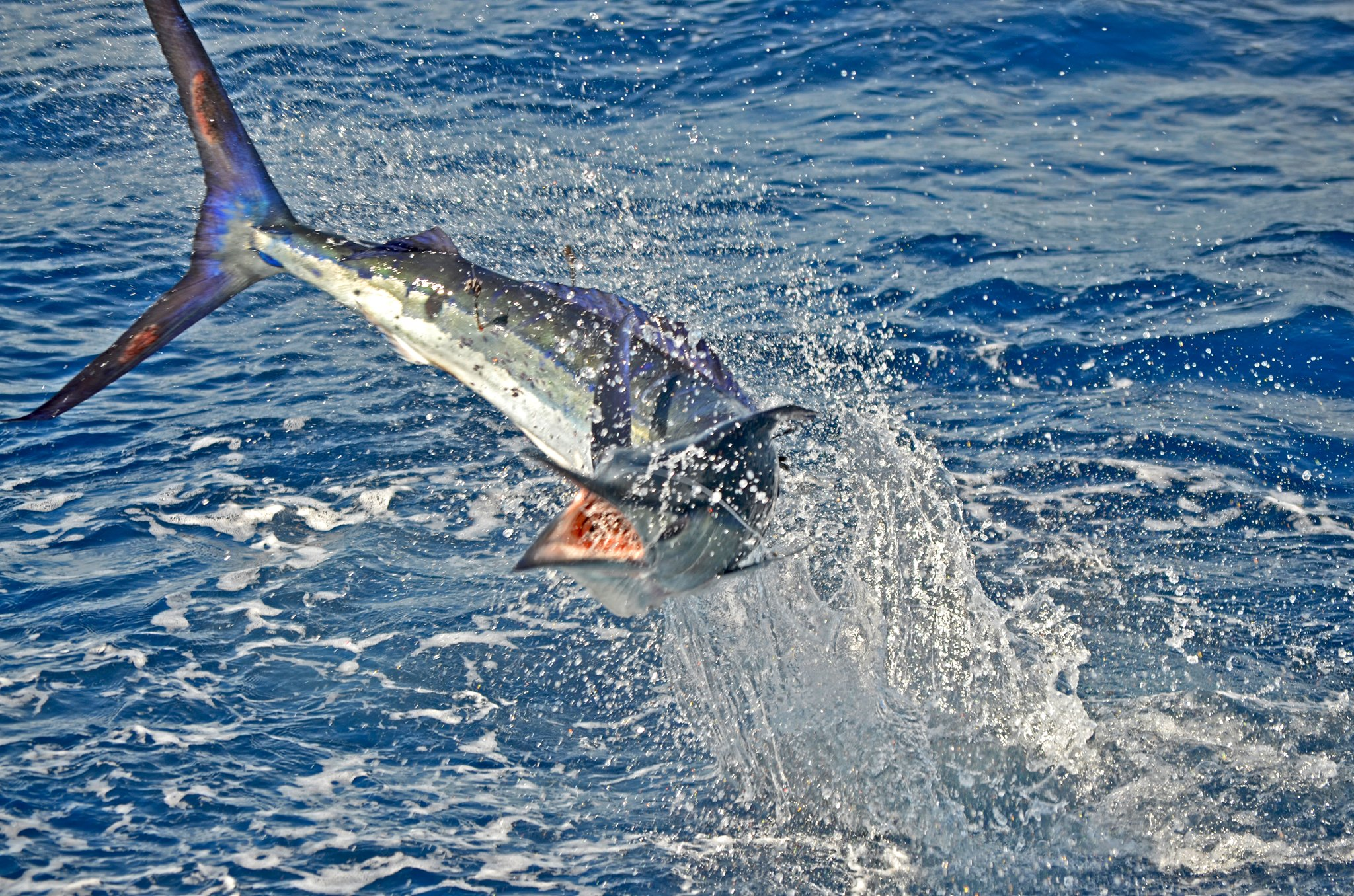 Tracking Offshore Fishing Patterns